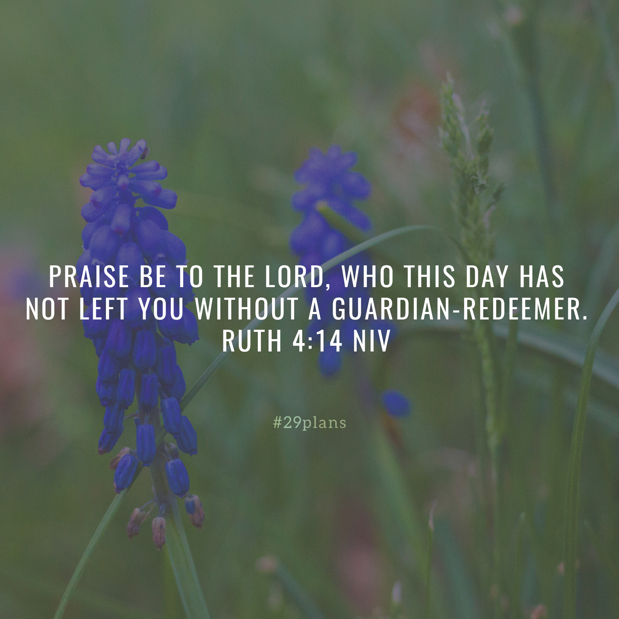 Today's Guide — 06.14.18— Ruth Redeemed and Justified by Faith