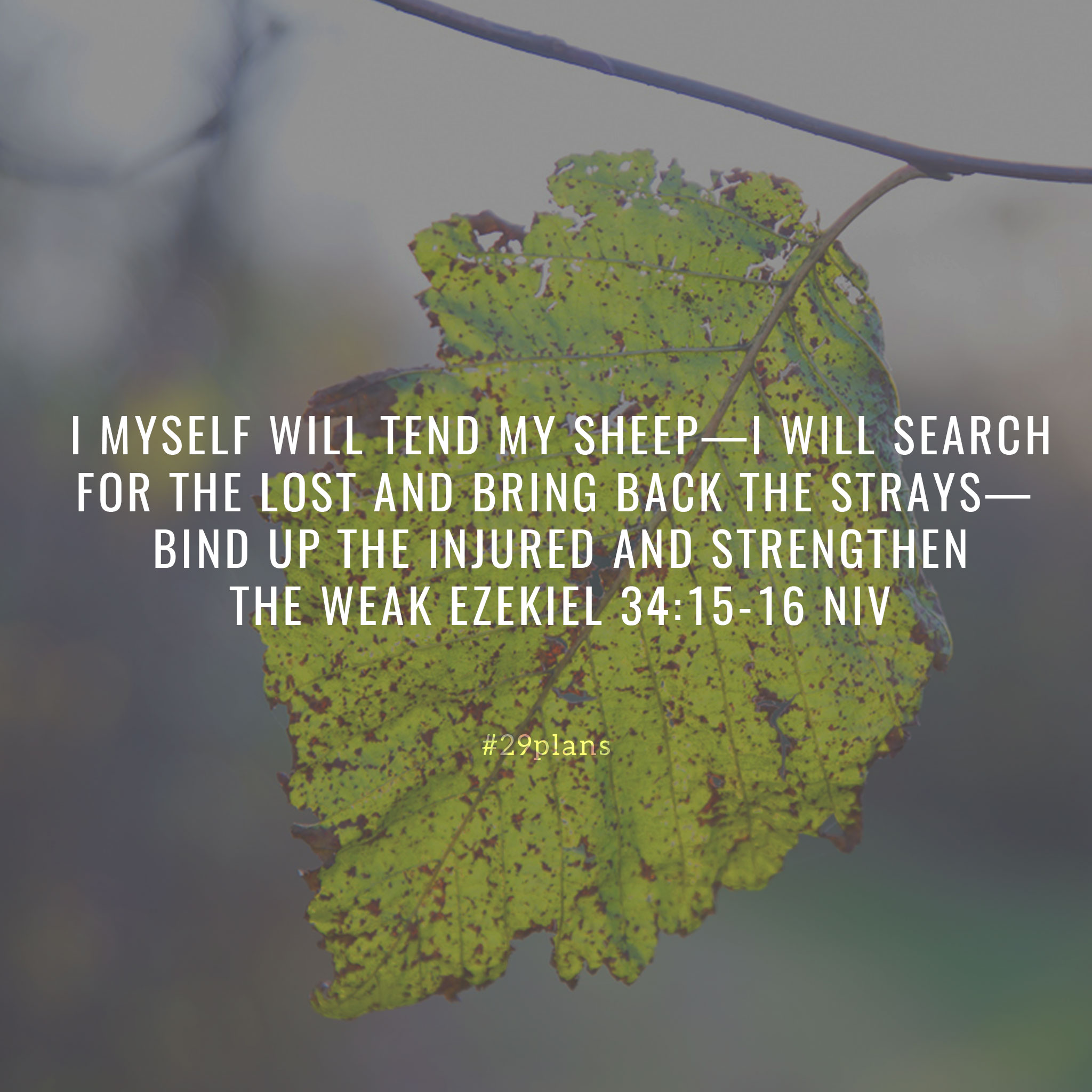 Today's Guide — 11.29.18 — The Shepherd