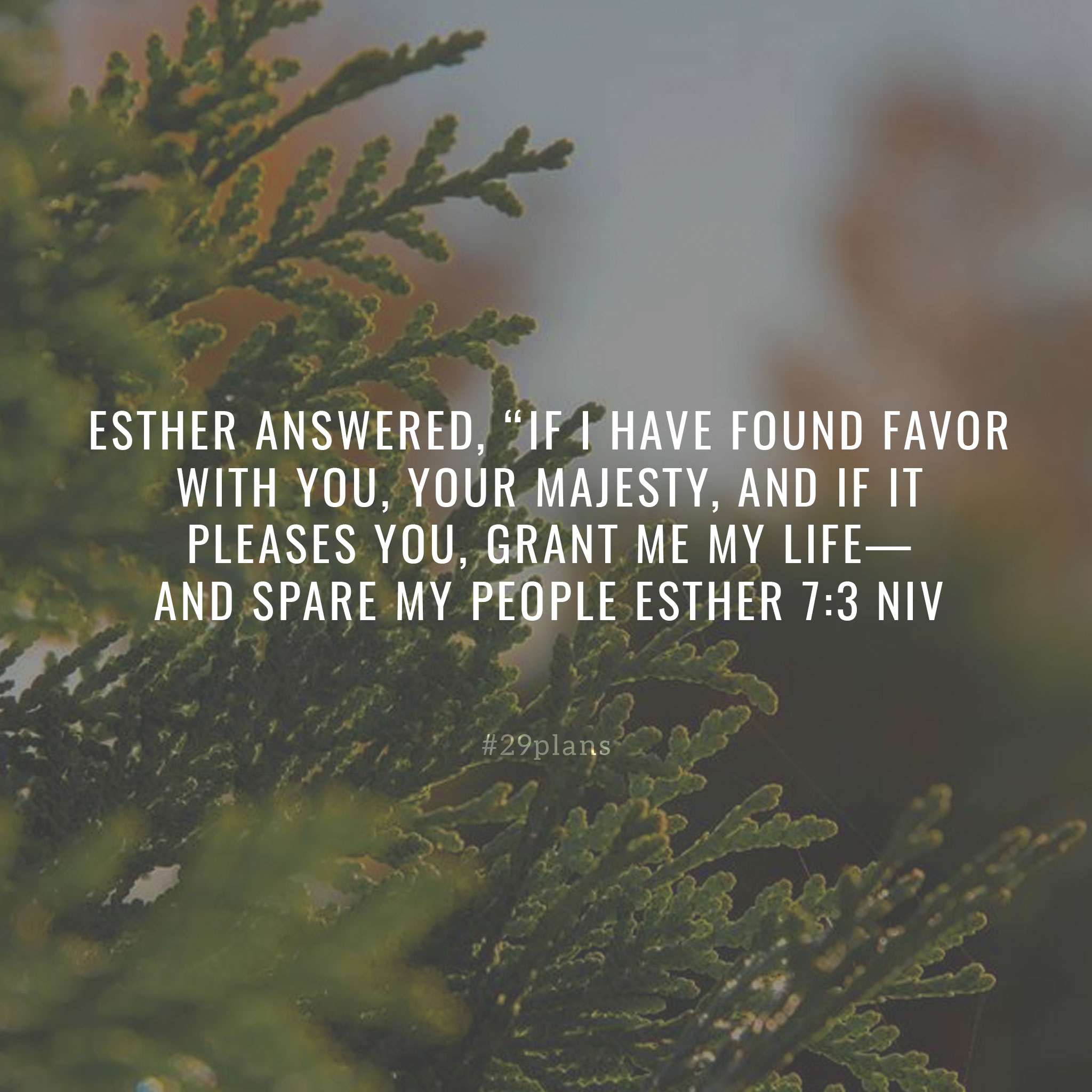 Today's Guide — 12.13.18 — Found Favor